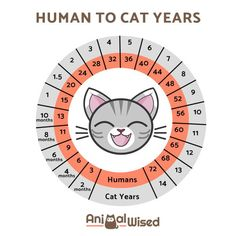 How Old Is Cat In Human Years - World's largest collection of cat memes and other animals Crazy Cat Lady, Crazy Cats, Cute Cats, Funny Cats, I Love Cats, Adorable Kittens, Cat Ideas, Animals And Pets, Cute Animals