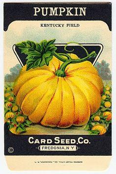 *The Graphics Fairy LLC*: Vintage Halloween Clip Art - Adorable Pumpkin Seed Packet Vintage Diy, Images Vintage, Vintage Labels, Vintage Signs, Vintage Fall, Vintage Metal, Vintage Thanksgiving, Vintage Cards, Vintage Paper