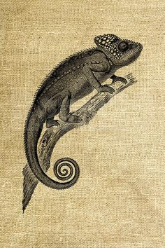 Animal Sketches, Animal Drawings, Drawing Sketches, Chameleon Tattoo, Simplistic Tattoos, Bullet Journal Art, Illustration, Nature Prints, Creature Design