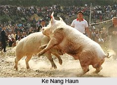 Ke Nang Haun, one of the prime game of Andaman and Nicobar Islands, is a kind of pig fighting, mainly played among the male members of Nicobarese tribe. For more visit the page. #sports #games #tribes