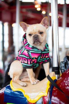 FRENCHIE DOG HOODIE - BAJA - Frenchie Bulldog