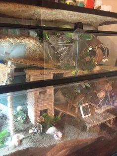 Hermit Crab Cage, Hermit Crab Homes, Hermit Crab Habitat, Hermit Crab Shells, Hermit Crabs, Reptile Rescue, Gecko Terrarium, Crab Decor, Reptiles