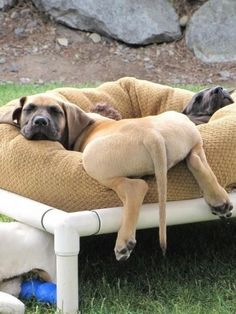 Great Dane puppies! The picture of comfy. :)