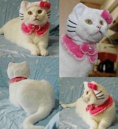 ハローキティー? : おもしろ 猫・ネコ・ねこ画像 - NAVER まとめ