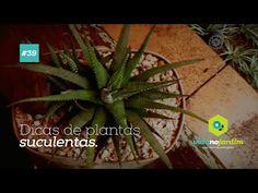 """""""IDEIAS"""" suculentas - YouTube"""