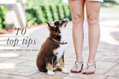 Our top ten tips for keeping you and your new pup safe, healthy and happy...leaving more time for pupper snuggles. Celebrity Dogs, Animal Projects, Home Photo, New Puppy, Dog Photography, Diy Stuffed Animals, Pet Accessories, Dog Lovers, Champagne Cupcakes