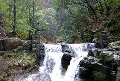 Queda de água na Floresta laurissilva- Madeira