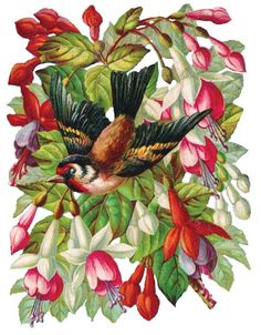 Scraps - Victorian Die Cut - Victorian Scrap - Tube Victorienne - Glansbilleder - Plaatjes: Birds and flowers