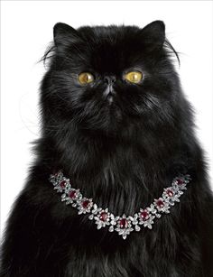 Classy cat.  Stunning necklace.  But what else would you expect from Harry Winston?    Harry Winston advertsing campaign, photographed by Laziz Hamani.