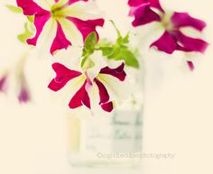 Flower photography  still life flowers photograph by IngridBeddoes, $15.00