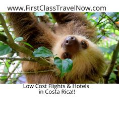 La Fortuna, Costa Rica is a dynamic destination fit for any type of vacation and traveler. Check out this list to help you plan your perfect vacation! Montezuma, Monteverde, Aigle Harpie, Tabacon Hot Springs, Voyage Costa Rica, Baby Sloth, Flight And Hotel, Rest And Relaxation, Parcs
