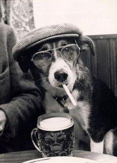 oldtimer dog