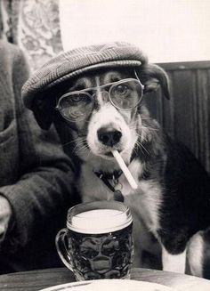 "Dog: "" I asked for decaf you stupid human! Now I half to back to get another one and pay again! Gosh dude. I am disappointed in you human! Ver disappointed in you."