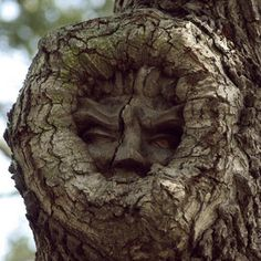 Ah-- want to give those kiddies dreams to remember?? Try one of these peeking out them from a garden tree!! LOL!! A Tree Spirit to remember for sure!  from The Goddess, Mother Earth, Mother Nature.