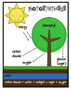 Photosynthesis posterclassroom display and worksheet populations plants critters and food websone extra degree ccuart Gallery
