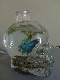 Skull fish bowl --- But please no one do this with their fish. All fish need a…