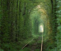 Tunnel of love, Ukraine - Alexander Ishchenko/Getty Images