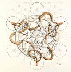 Rafael Araujo, Snakes Contemporary Artists, Phone, Instagram, Mathematics, Math, Telephone, Mobile Phones