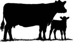 Show Cattle decal/ Cow Face Decal/Farm Decal/ Cow Farm Decal Silhouette Painting, Silhouette Clip Art, Animal Silhouette, Silhouette Projects, Silhouette Design, Silhouette Studio, Truck Stickers, Window Stickers, Show Cattle