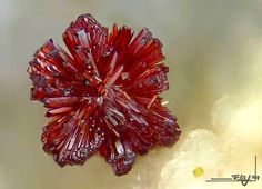 Rare carminite rose from Meleg-hill in Hungary