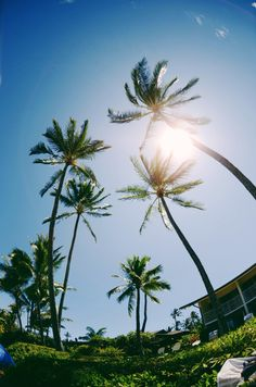 Palms, Hawaii
