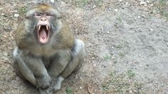 #monkey #animals #nature #vacation #photos #photo #travel #pics #wroclaw #poland