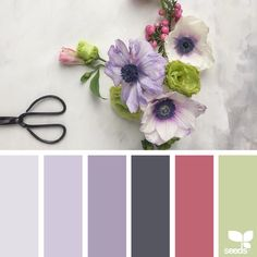 today's inspiration image for { color spring } is by @c_colli ... thank you, Cristina, for another beautiful #SeedsColor image share!