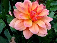 Dhalia love the colors