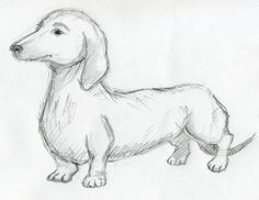 How to sketch a Doxie