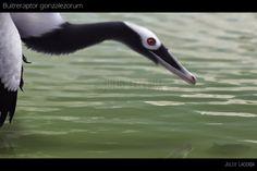 Come Here Fishy, Fishy by Julio-Lacerda.deviantart.com on @deviantART