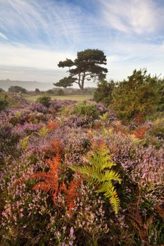 Simon Byrne Photography: Bratley View, The New Forest, Hampshire