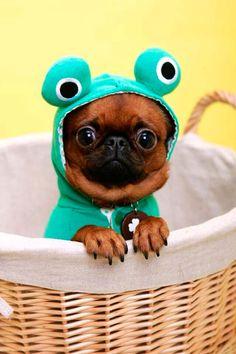 12 disfraces de animales, ¡y más ideas caseras! Disfraces de animales para niños. Estos 12 disfraces infantiles caseros de animales te ayudarán en la construcción de tu disfraz para Halloween o Carnaval.