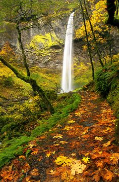 Elowah Autumn Trail. Fall leaves Scattered on the Trail to Elowah Falls in the Columbia River Gorge of Oregon.