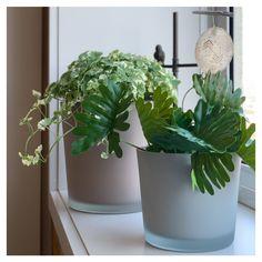Pequenos detalhes que transformam: plantas na decoração. Os cachepots em vidro cinza - e em cores neutras para qualquer folhagem - são ideais para transmitir limpeza em um ambiente ou jardim. Sensações de aconchego e leveza, o que mais buscamos. E você? Vem ver no site as diferentes opções de vasos e aproveite para trazer o verde para dentro de casa! #OccaModerna #OccaModernaEVocê #Decoracao #PortoAlegre #HomeDesign #Decor #Ambientes #DecoracaoDeAmbientes #Plantas #PlantasEmCasa…
