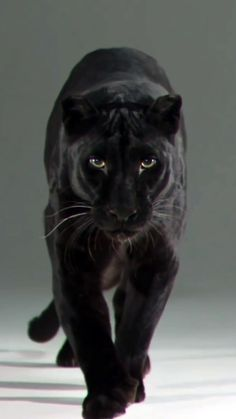 black panther animal Beautiful pantera Live wallpaper for your iPhone XS from Everpix Live Animals And Pets, Baby Animals, Cute Animals, Cat Wallpaper, Animal Wallpaper, Jaguar Wallpaper, Live Wallpaper Iphone, Beautiful Cats, Animals Beautiful