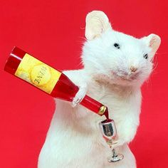 Wine O Clock, Pet Store, Gold Paint, Taxidermy, Guinea Pigs, How To Take Photos, Halloween Pumpkins, Reptiles, Squirrel