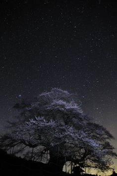 Star and Cherry blossom, Japan