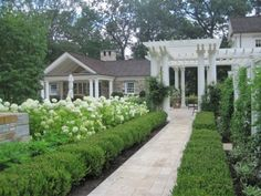 Boxwoods with white roses