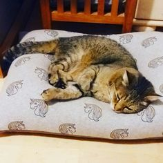 Beanbag for cats Bean Bag, Cats, Happy, Animals, Tomy, Pet Dogs, Gatos, Animales, Animaux
