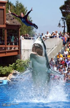 This is what I should do with my life    jk that's a Great White Shark and they can't survive in captivity for more than 2 weeks