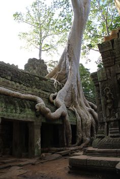 Cambodia.  I can't wait to go back!