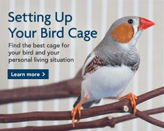 PETSMART -- SETTING UP YOUR BIRD CAGE:  Find the best cage for your bird and your personal living situation.