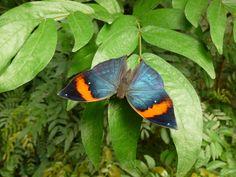 Dans la forêt tropical les animaux sont plus grands, plus colorés ou plus étranges. Au Naturospace ils peuvent être observés dans des conditions exceptionnelles.