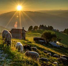 Pascolo            DSC by lambertoferro  foto sole tramonto luce paesaggio di montagna Montagna tramonto sul grappa pecore al pascolo Pascolo