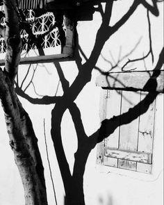 #photo #photos #photoart #photoarena #art #artphoto #artphotography #artphoto_bw #artphotogram #fotografia #foto #fotos #fotografia #fotografheryerde #fotograf #portre #portrephotography #arts #artofblack #artblackandwhite #street #streetart #oldstreet #oldstreets by caginbermephotoart