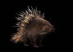 Latest Updates | Photo Ark - National Geographic Society
