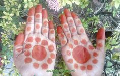Pure Mehndi Powder Prem Dulhan Review by Indian Beauty Zone - Pic. 4
