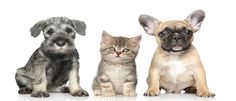 Pet Care Cheap Veterinary Advice from the Experts and others!