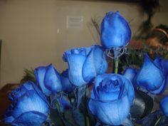 Que lo nublado no nos quite la sonrisas, feliz jueves amigos les recordamos que ya estan aqui nuestras Rosas Azules