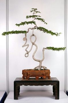 "Penjing is more ""freestyle"" than bonsai. This twisty, curly-cue style is a perfect example. Sometimes the design even forms Chinese characters."